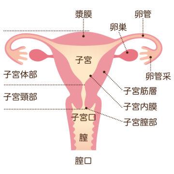 子宮筋腫 (子宮腫瘍)