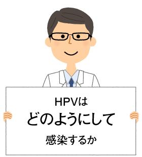 HPVはどのようにして感染するか
